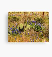 Hill Country Wildflowers Canvas Print