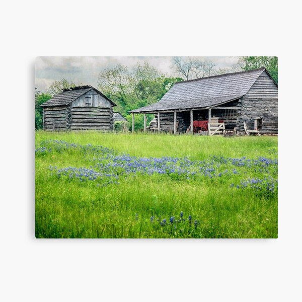 Bluebonnet Farm Canvas Print