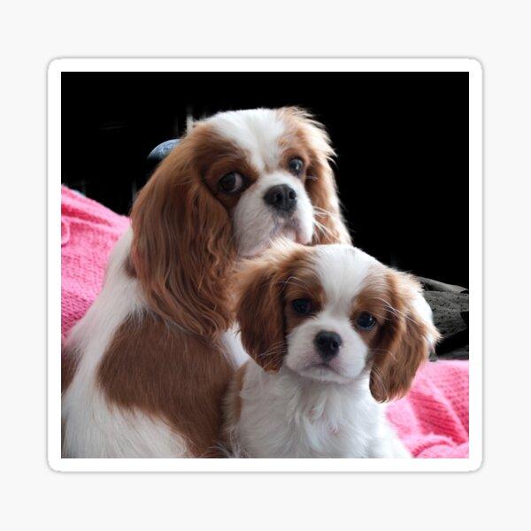 Cavalier Mum and Baby Sticker