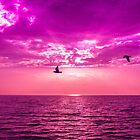 seagulls by hayrettinsokmen