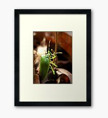 Winter Bug Framed Print