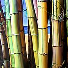 """""""Bamboozled"""" - oil painting of bamboo by James  Knowles"""