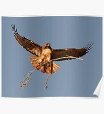 Nest Builder Poster