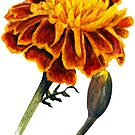 French Marigolds watercolor painting by Sarah Trett