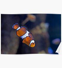 Clowning Around (Aquarium of the Pacific, Long Beach, California) Poster