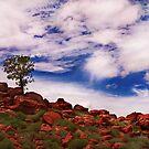 Lone Tree by Sheldon Pettit