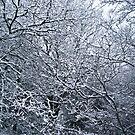 Frozen by mejmankani