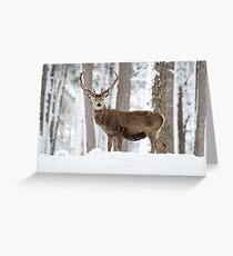 Red deer standing stag Christmas  Greeting Card