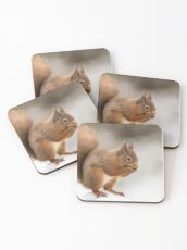 Red squirrel in the snow at Christmas  Coasters