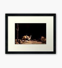 ~Sleeping Little Fennec Fox~ Framed Print