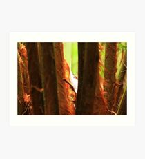 Tree fern stems, red and hairy Art Print