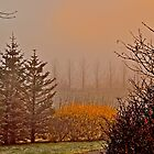 A light in the fog  ! by siggabach