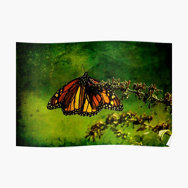 Butteryfly in the Mist Poster