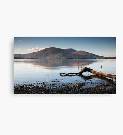 Lone Branch, Lough Leane Canvas Print