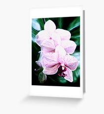 """Orchid"" - pale pink orchid flowers Greeting Card"