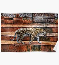 Tiger @ Animal Kingdom Poster