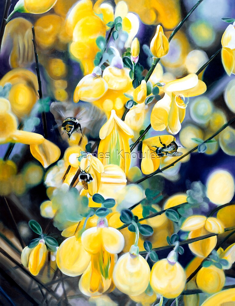 """""""The Lightness of Bee-ing"""" - oil painting of bee's in the gorse bushes by James  Knowles"""