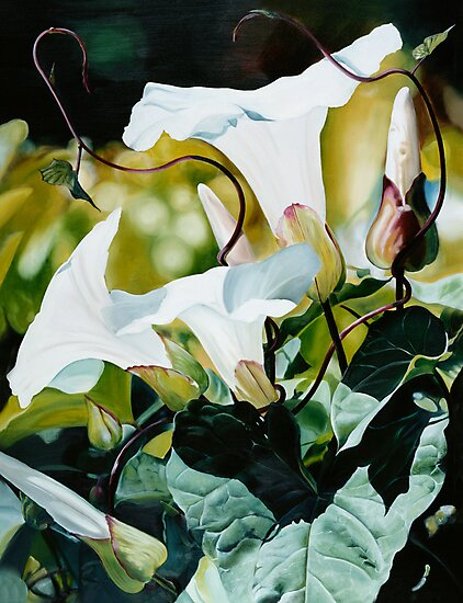 """Persistence"" - oil painting of white morning glory flowers by James  Knowles"