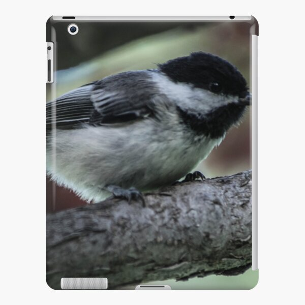 Chickadee Perched. iPad Snap Case