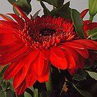 Liam's cut flower by Roxy66