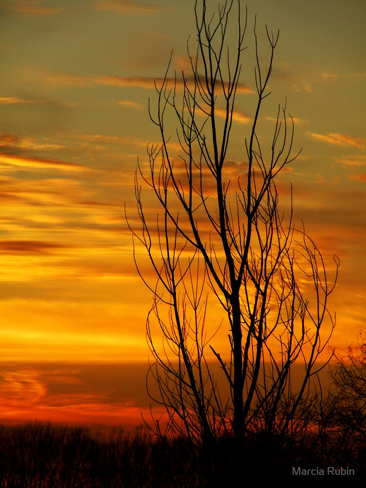 A Tree Stands Alone by Marcia Rubin