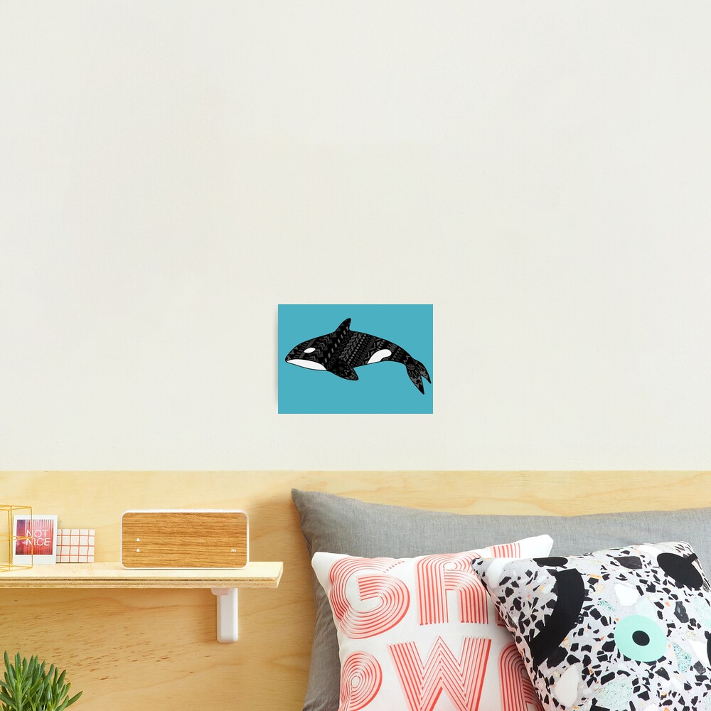 Orcinus orca, the Killer Whale Photographic Print