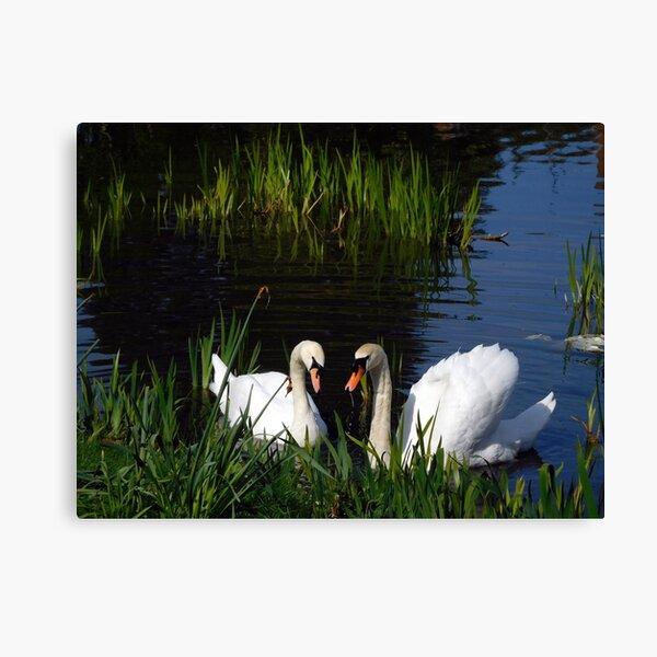 Swans Bletchley Park Canvas Print