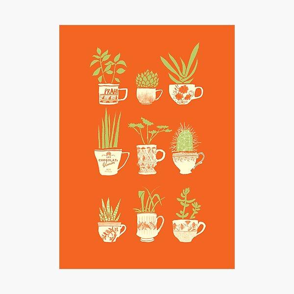 Teacup Succulents Photographic Print