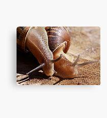 Best Friends - Garden Snail Cantareus aspersus Canvas Print