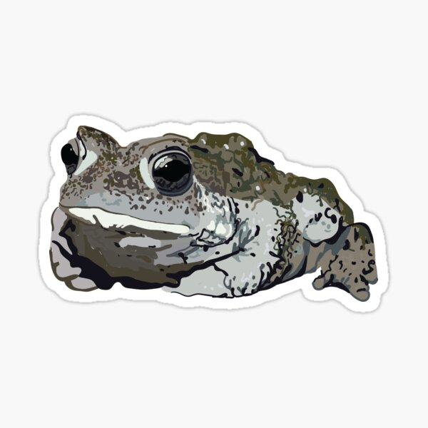 Boreal Toad Sticker