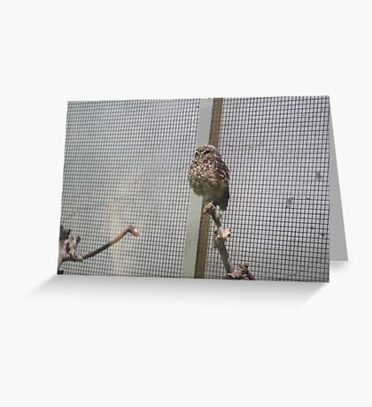 let me out of here Greeting Card