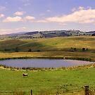 Swift Creek Panorama by Jennifer Craker