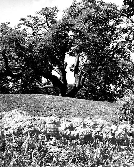Big Tree at Greynold's Park by glennc70000