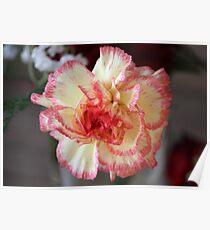 Pretty Carnation Poster