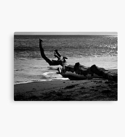 Beach Tree Canvas Print