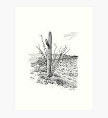 Saguaro National Park, Arizona Art Print