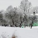 Green House in winter time by Antanas