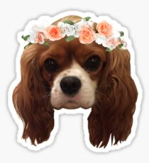 King Charles Cavalier with flower crown Sticker