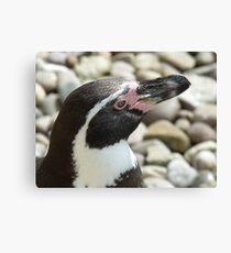 Penguin @ Paradise wildlife park Canvas Print