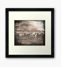 Bad weather coming! Framed Print