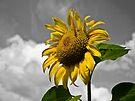Sunflower by Denise Abé