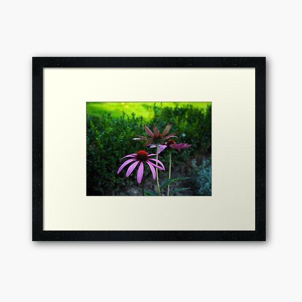 Purple flowers make me happy! Framed Art Print