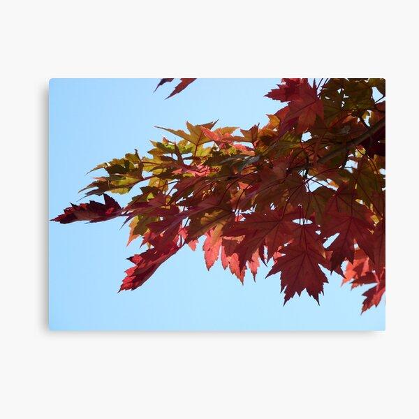 Autumn Glow II Canvas Print