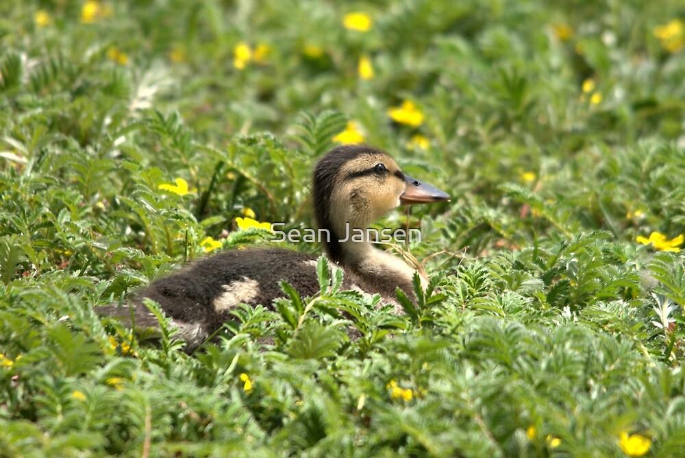 Little Darling Duck by Sean Jansen