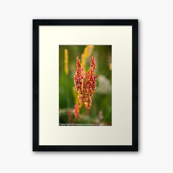 Wild pink flowers from Meadow flower collection  Framed Art Print