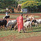 Chaga Cattle Herdsmen, Tanzania by Adrian Paul