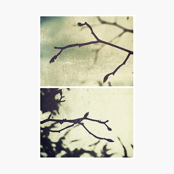 Spring I Photographic Print