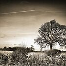 Ambrotype Tree by Nick Bland
