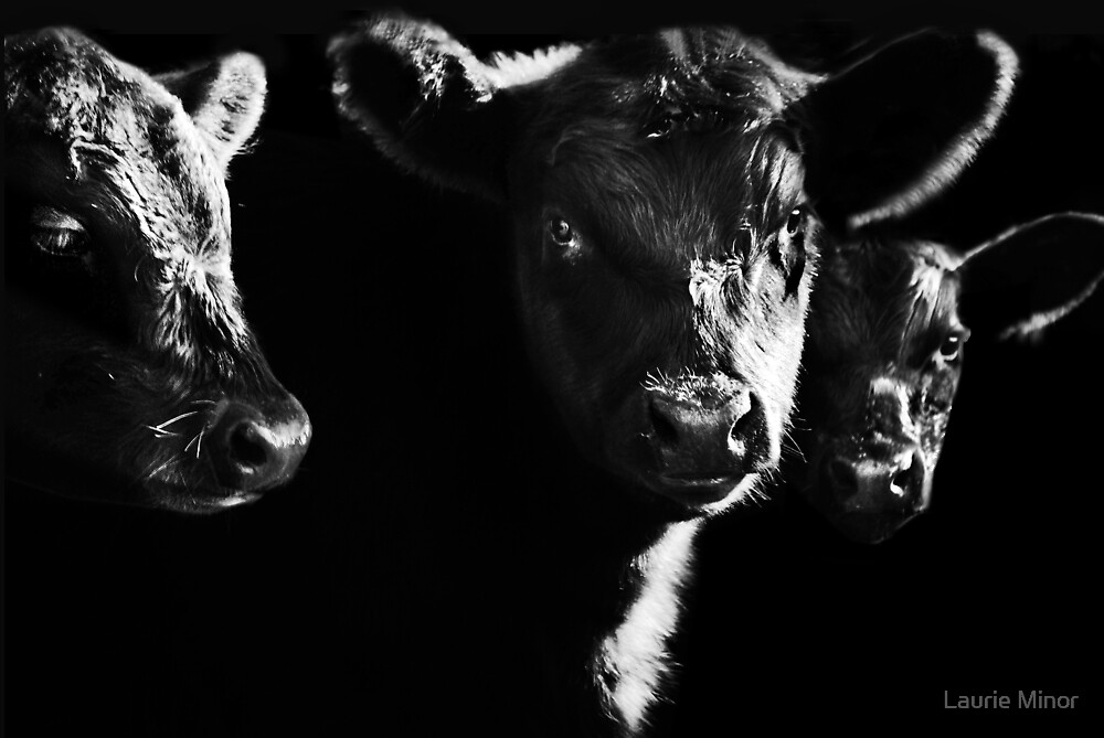 Cow With Calves #2 by Laurie Minor
