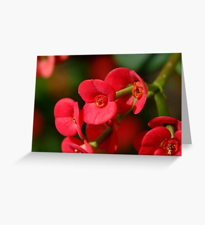 Lady in Red! Greeting Card